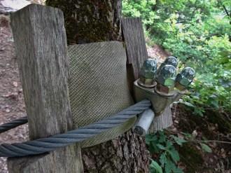Schutz der Bäume