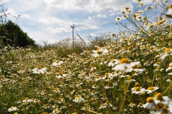Blumenwiese im Hunsrück