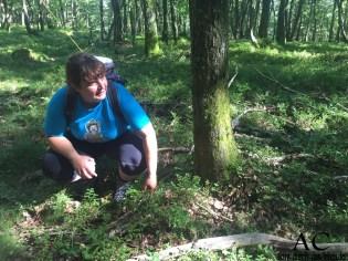 Sandra Wenz erklärt den Kindern im Auftrag vom Willy Wurzel den Wald