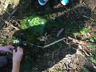Das Wald-Bild für die Gnome, Elfen und Feen, das die Knder gebaut haben mit den gesammelten Dingen