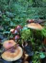 Und überall Pilze