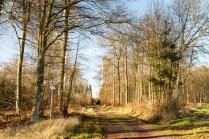 größere Waldwege