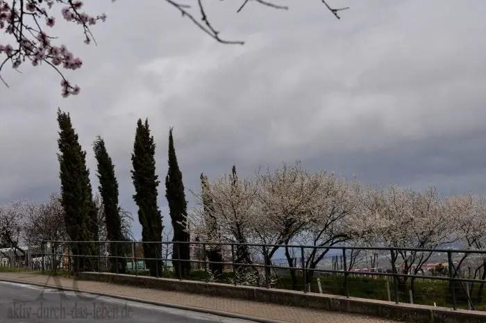 Wenn alles stimmt, blühen auch andere Bäume zur gleichen Zeit...