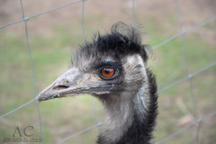 Ein Emu beobachtete uns etwas argwöhnisch