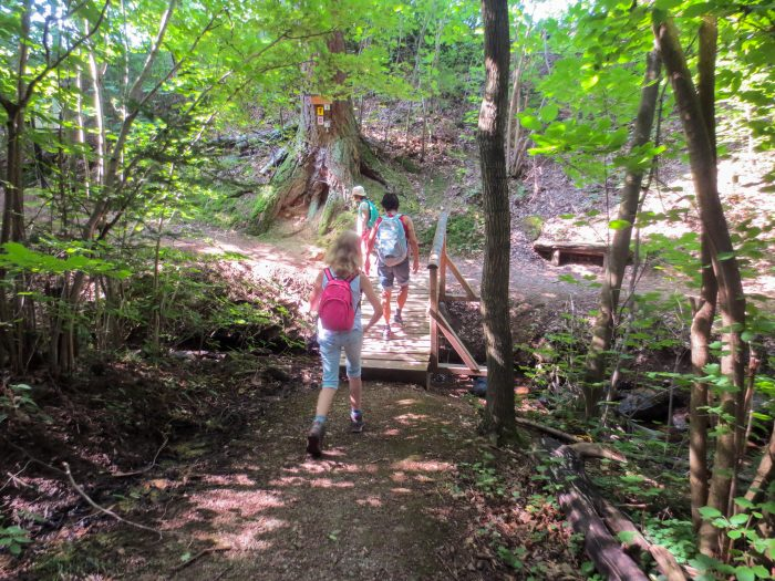 Traumschleife Heimat - Wald