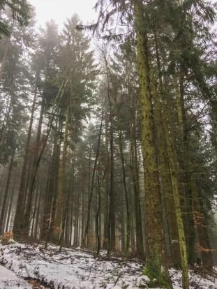 Schneeschuhwanderung Reinsfeld 18
