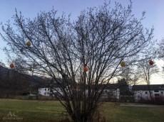 Ein Lampion-Baum :-)