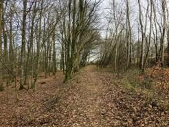 Der Weg aus dem Wald