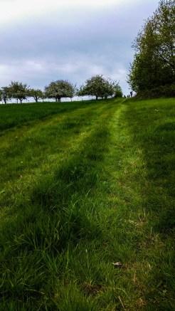Der Wiesenweg