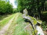 Totholz ist Leben