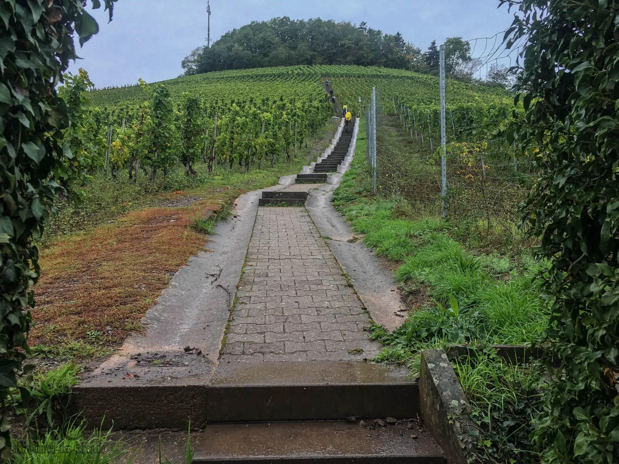 Treppen die Weinberge hinauf