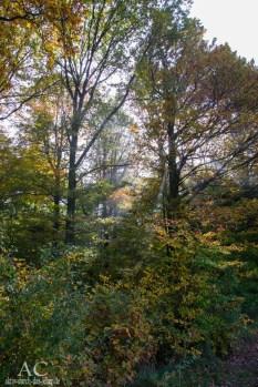 Im Wald - herrliche Stimmung