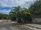 Wunderschöne Palmen in Le Dramont