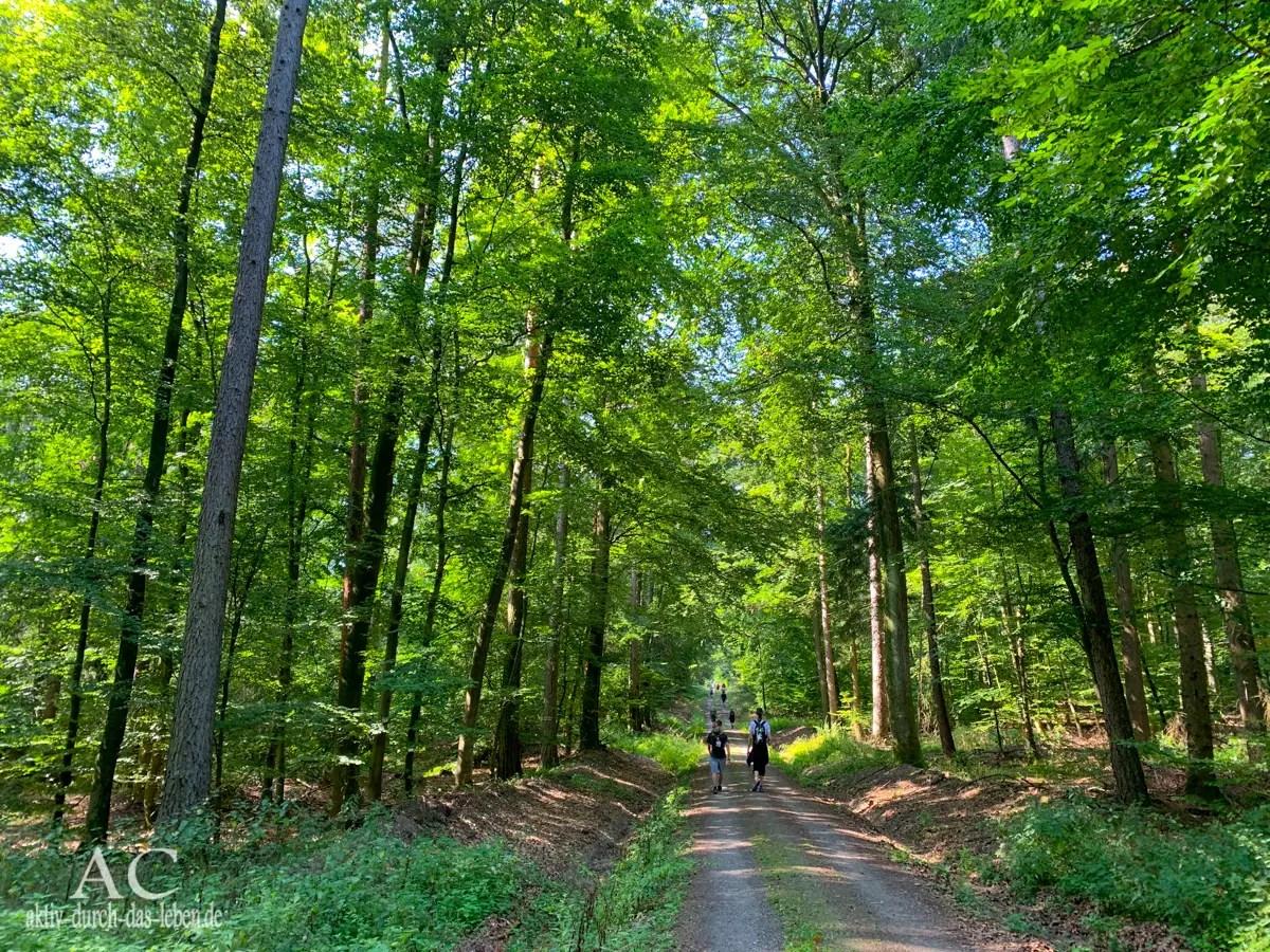 Spessart 50 Wald