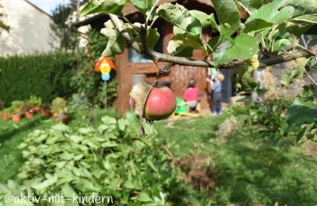 Apfelbaum im Garten