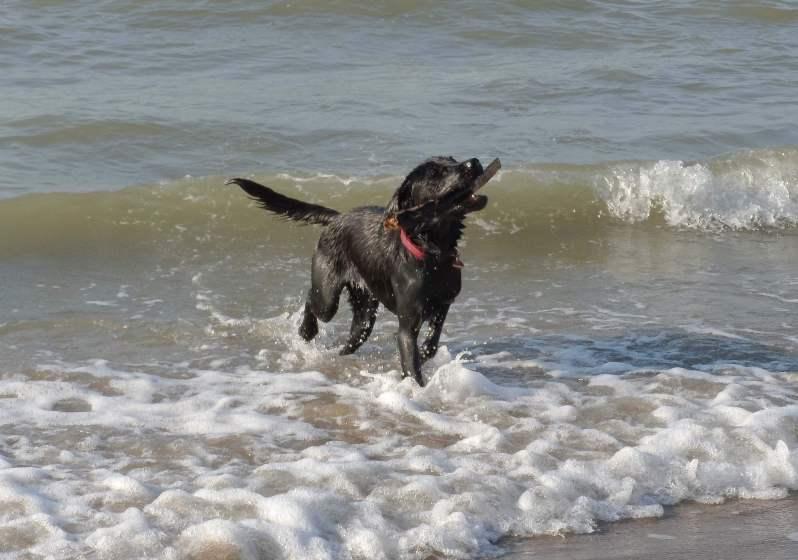Hund im Urlaub am Meer