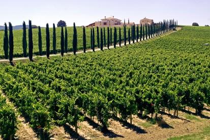 Vingård i Umbria