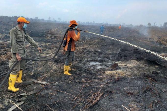 Kebakaran hutan dan lahan (karhutla) di Kelurahan Bangsal Aceh, Kecamatan Sungai Sembilan, Kota Dumai, Riau, Senin (18/2/2019).(KOMPAS.com/IDON TANJUNG)