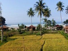 Sawah di Lampung (Antara Lampung/HO/Agus Wira Sukarta)