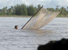 Ilustrasi Nelayan Udang