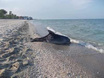 delfin-mort
