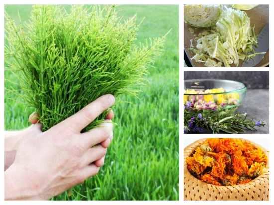 Tratamente naturiste împotriva negilor | Paradis Verde