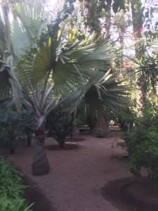 marrakesch marokko IMG 0298
