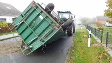 Photo of Verkehrsunfall mit lebenden Rindern endet glimpflich