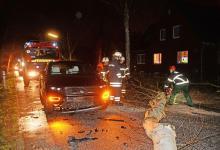 Bild von Keine Verletzten bei Zusammenstoß mit Baum