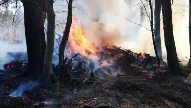 Photo of Fünf Feuerwehren bei ausgedehntem Vegetationsbrand in Stelle im Einsatz