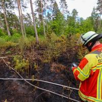 Feuerwehr löscht Waldbrand bei Stelle