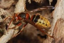 Bild von Vorsicht vor unseriösen Schädlingsbekämpfern