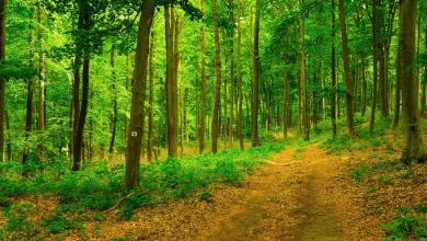Photo of Vorsicht unter Bäumen – Trockenstress kann zu Astbrüchen führen