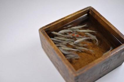 goldfish-1-600x399