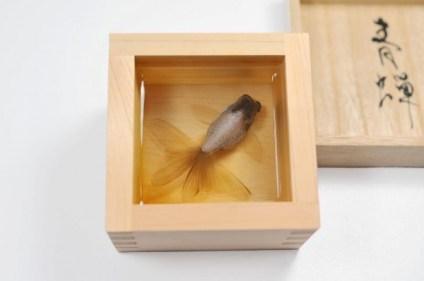 goldfish-4-600x398