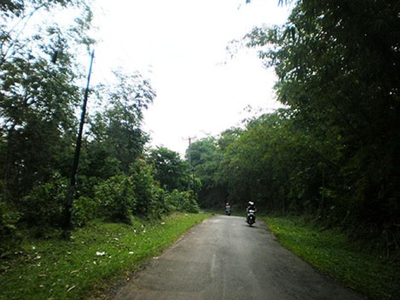 Jalan dengan sisi pohon bambu