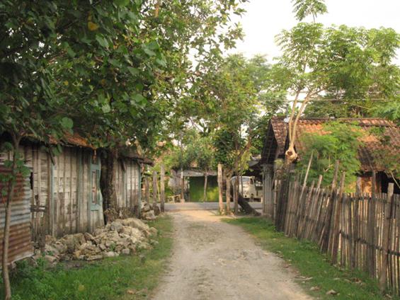 Pekarangan di sekitar rumah yang jarang sekali ada pohon kelapa.