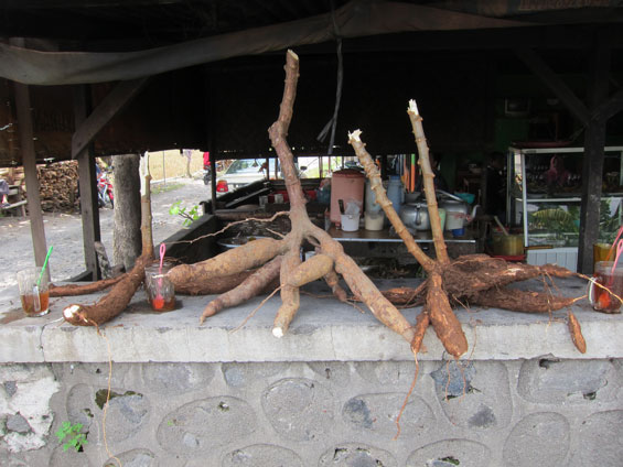The cassava on the side of the street.