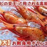 「海老の王様と称される絶品の味わい」 「特大」お刺身ぼたんえび 500g