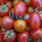 ミニトマト・中玉トマトの3種詰め合わせ1kg (各トマトの分量は収穫状況によ