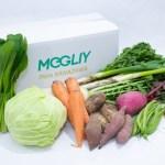 《金沢野菜》MEGLIY野菜セット(8〜10種)季節により野菜の内容は異なります。