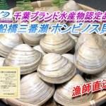 【20%増量中】船橋三番瀬ホンビノス貝1㎏⇒1.2㎏【千葉ブランド水産物認定品】