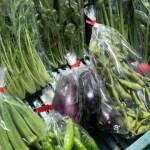 小さな農家、旬のお野菜セット12品目 【農薬・化学肥料・除草剤不使用】