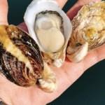 バージンオイスターとは産卵を経験していない真牡蠣 2kg(40個前後)