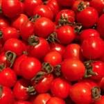 ミニトマト 太陽の恵みをたっぷりもらった糖度10度以上の極上「ほれトマト」1.5kg