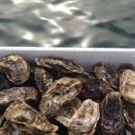 旨味成分が強くクセがなく食べやすい!是非、岡山県産の牡蠣