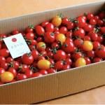 ドロップファームの美容トマト3キロ箱 ジュースサンプル付き♪