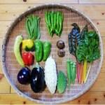 黒ニンニク(30~50g)、野菜(すべて農薬・化学肥料不使用)9種類前後