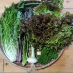 サラダ野菜セット【5種類前後の野菜】【とれたてハチミツ小瓶付き