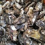 宮城県産 殻付き 牡蠣 殻付き 牡蠣 殻付 カキ 加熱調理用 一年牡蠣